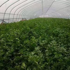 鲍家村蔬菜种植户有200多户,多年来缺乏有效的组织形式,...