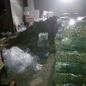 山东省聊城市八大寨蔬菜专业合作社常年供应菠菜,每天3--...