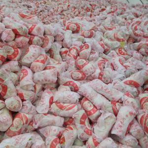本地黄心娃娃菜已大量上市,质量好,价格优,提供住宿场地,...