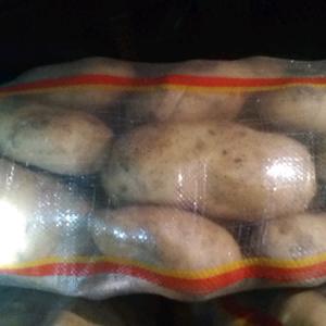 围场和内蒙沙土地种植土豆,皮毛干净薯型漂亮,个头特大规格...