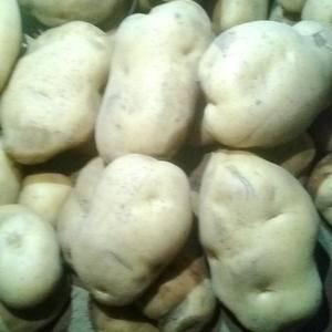 围场和内蒙土豆兴佳2号,与尤金885一样,黄皮黄心薯型介...