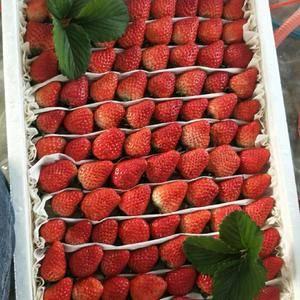 南通红颜草莓大量上市,物美价廉,联系电话,1811227...