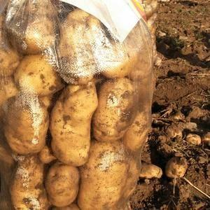 张薯226三两通货0.46元