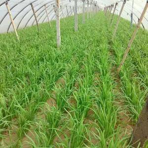 海阳韭菜大型种植基地。 本人常年销售韭菜,可提供最优质的...