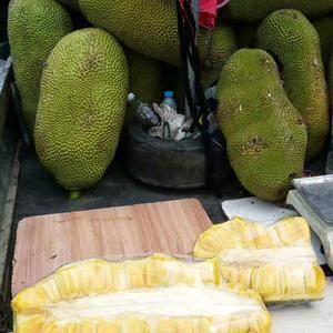 @奕呈海南菠萝蜜批发18389683737有想要货的事...