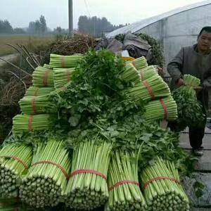 芹菜大量上市,绝对保质保量,代收代发全国,冰瓶,冰块,纸...