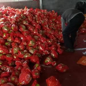 大量供应琯溪蜜柚,口感好,价格优,需要可联系156293...