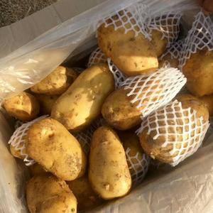 大量供应优质荷兰十五土豆,三两通天货,有需要的老板联系1...
