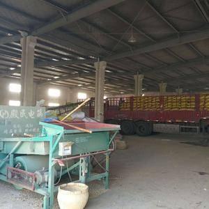 大量供应安徽黄豆,品质好,自己家收购点,一手货源,价格合...