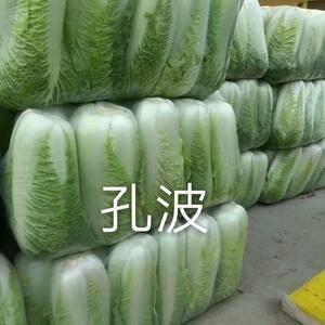 肥城大白菜大量供应,品种北京新三号,可持续供应