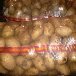 大量批发代办河北围场迷你小土豆,1~3两或者2~3两,主...