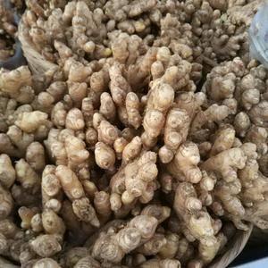 腾冲团田乡小丙弄村,现有食用黄生姜60吨,急需出售,如有...