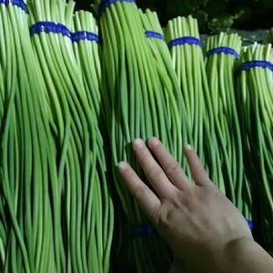 金乡蒜苔,苔条长,苔条绿,口感好一直深受消费者的喜爱,蒜...