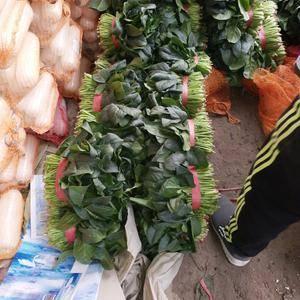 山东聊城菠菜大量上市,货源充足,根据市场需求提供各种包装...