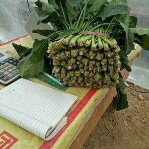 本市场主要菠菜,香菜,白菜,白卜萝,为主,共应全国超市,...