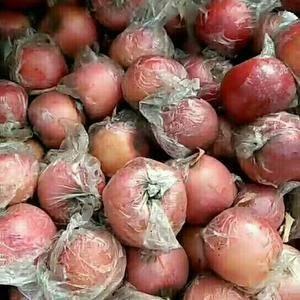陕西红富士苹果,纸袋,膜袋红富士苹果批发,1592908...