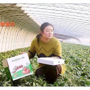 烟台龙口古埠草莓生长在莱之古国金黄县的莱山脚下、鸦雀河畔...