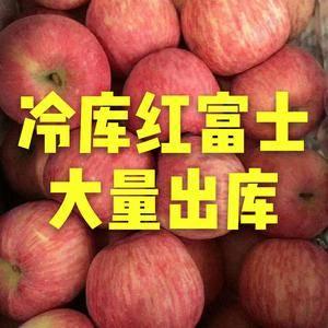 山东优质红富士苹果13963345444产地常年供应优质...
