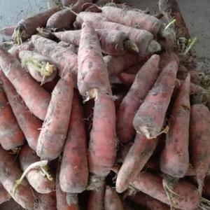 自家种的胡萝卜还有十点吨有要的联系,价格便宜电15269...