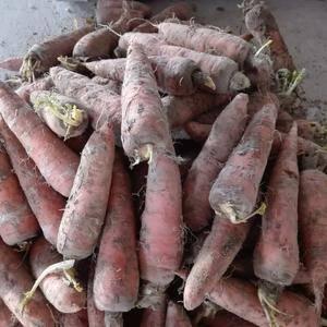 自家种的红萝卜还有十几吨价格便宜有要的联系喽电话1526...