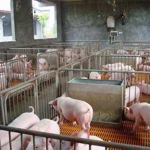 15266665888山东树利猪场拆迁力渐渐,三元仔猪低价出售...