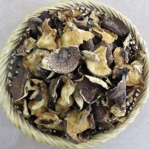 大瑶山里的野生香菇,肉薄味香,营养价值无法抗拒,不是有钱...
