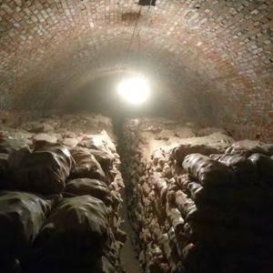 大量库存土豆出库中,有要的请与YY联系