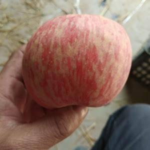 临猗坡上80以上不封顶的纸加膜富士苹果正在热销中,价格是...
