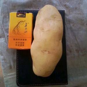 大量供应荷兰十五土豆,冷库货能持续供应到来年四月份,给三...