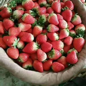 阜阳奶油草莓已大量上市,物美价廉,一件代发,电话:147...