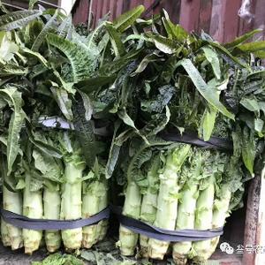 供应大棚红叶莴苣,优质的质量,低廉的价格,欢迎你的采购。...