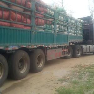 山东安丘万亩窖存芋头产地直销,需要的客户和我联系,电话1...