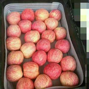 13573955797山东日照万吨冷库优质水晶红富士苹果...