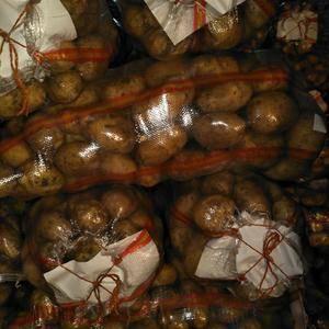 大量库存土豆急于出售,15804742000