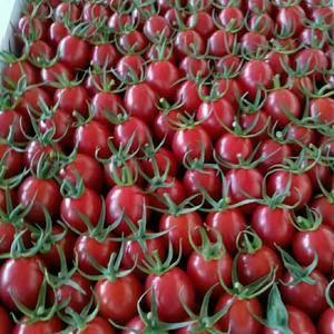 我地现有万亩樱桃西红柿(圣女果),正陆续上市,有需要的客...
