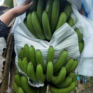 西双版纳有大量香蕉上市,需要货的可以联系,1375928...