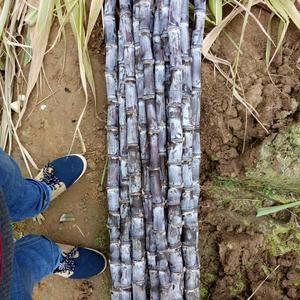 广西博白黑甘蔗水果黑皮甘蔗大量批发出售。质量好,节长。有...