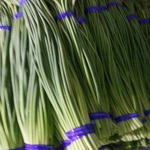 蒜薹贷款合同到期,急卖蒜薹300吨,价格1.55,同比市...