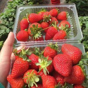 我们这的草莓,好吃,特别甜,含糖量,在12----15之...