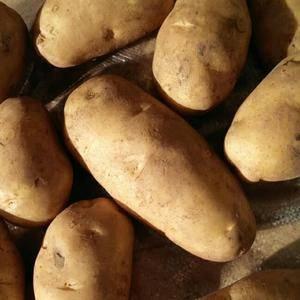 围场土豆大量出售,无伤残,无青头,无腐烂,黑心,无虫眼,...