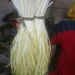 出售冬季韭菜(黄韭),送礼的好帮手过年的好菜