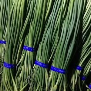 金乡红毛蒜薹大量出售!梢青、条长、无黄斑!质量上乘,价格...