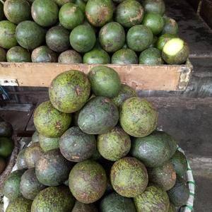缅甸进口柠檬,椰子,黄油果,苗苗水果批发部,云南瑞丽市,...