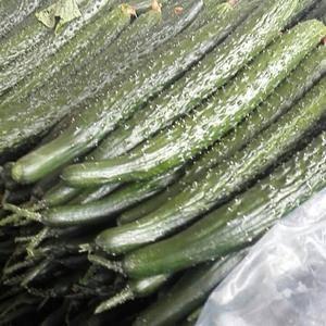 沂南黄瓜大量上市中,量大质量保证,可代购,代发,提供各种...