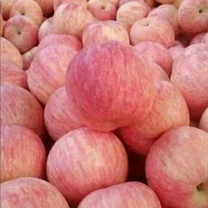 苹果。红富士苹75以上条红优质果