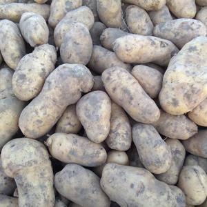 自己种的土豆,品种有尤金885,河兰七,延八,延九,延薯...
