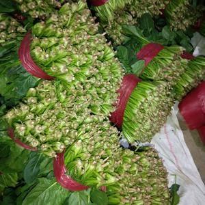金乡菠菜大量上市。可发各地客户。高度20-25公分。做工...