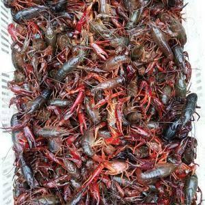 种虾,虾苗预订,成品虾,基围虾,泥鳅,黄鳝。大闸蟹,蟹苗...