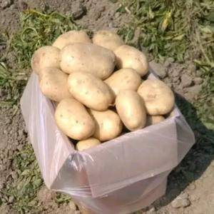 德宏新鲜土豆大量供应、上市时间(2月)质量好欢迎个位老板...