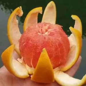 秭归脐橙产于湖北省宜昌市秭归县人正背,[15072543352...